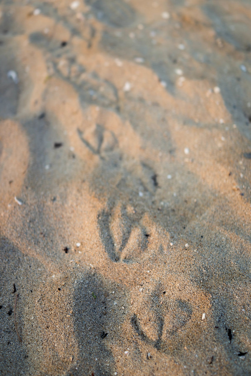 High Angle View Of Bird Footprints At Sandy Beach