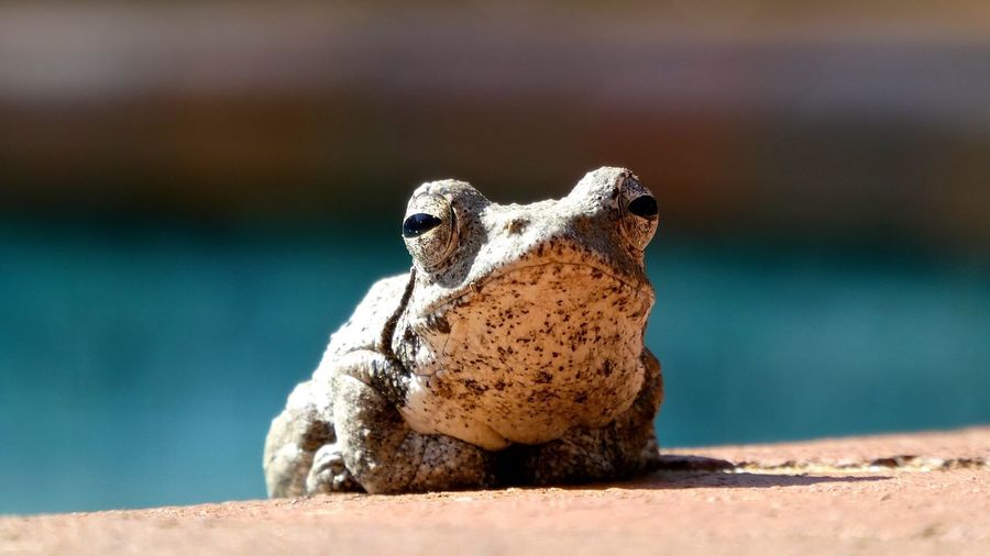 Close-up of frog on retaining wall