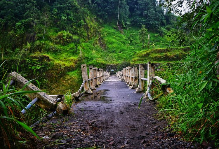 The Way Forward Nature Tree Growth No People Green Color Outdoors Beauty In Nature Tranquility Plant Tranquil Scene Scenics Day Water Rural Architecture My Photography Bridge Bridge - Man Made Structure Architecture Rural Scene