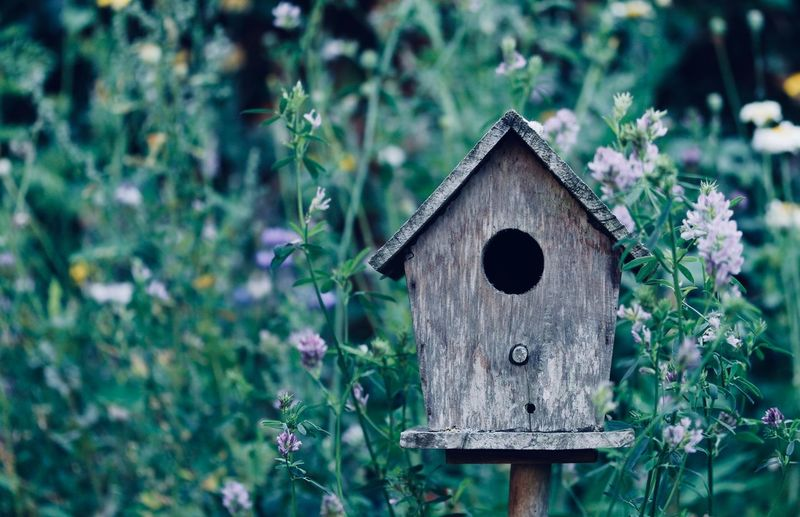 Close-up of birdhouse by plants