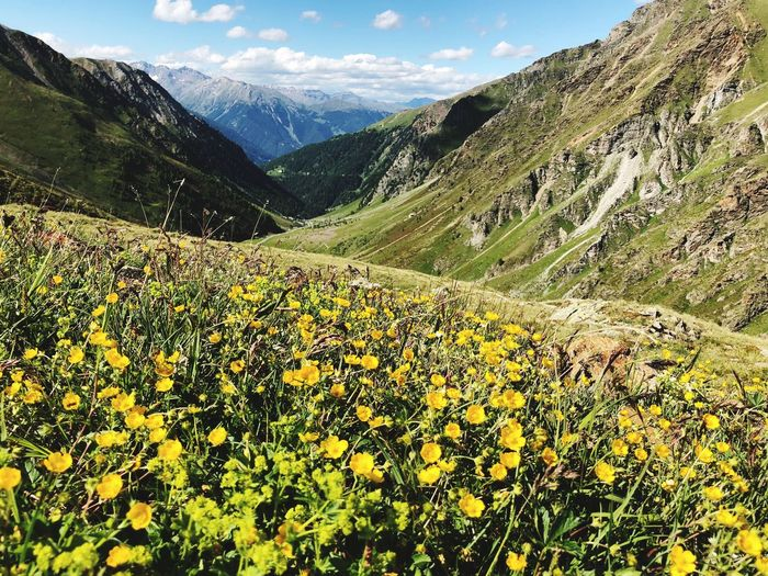 Mountain Plant Beauty In Nature Scenics - Nature Growth Tranquility Tranquil Scene Nature Mountain Range Flower Environment Land Flowering Plant Sky