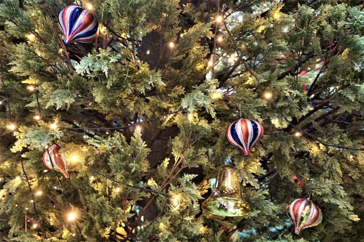 Christmas Decoration Green Color Plant Ornament Christmas Ornament No People Nature Close-up Bell Bauble The Week On EyeEm Happiness Celebration Women The Week Of Eyeem EyeEm Ready   Adults Only EyeEm Ready   EyeEm Ready   Christmas Decoration Tree Water Lifestyles