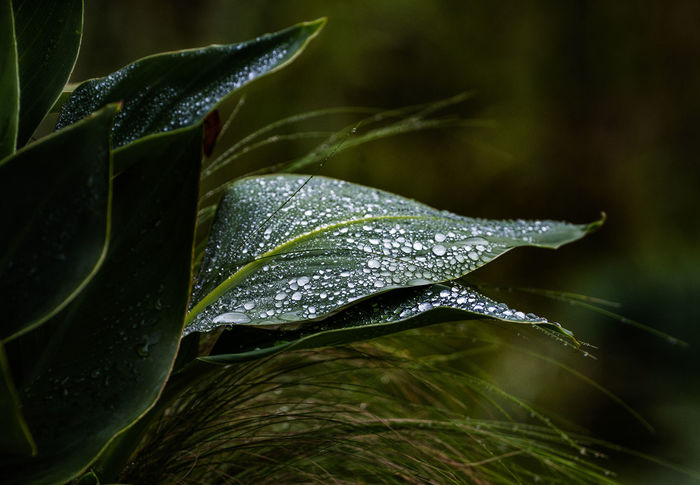 Dark and moody Abstract Photography After The Rain Beauty In Nature Dark Corner Of The Garden Design Dew Flower Flower Head Green Color Leaf Nature Outdoors Plant Plant Part Rain RainDrop Rainy Season Water Wet Wet Plants