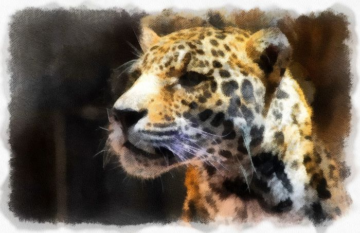 Animal Themes Animal Wildlife Animals In The Wild Close-up Day Digital Art Leopard Mammal No People One Animal Outdoors Photo Manipulation