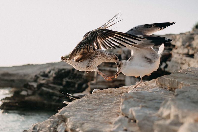 Close-up of seagulls on rock against sky