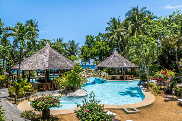 Tree Plant Tropical Climate Palm Tree Water Swimming Pool Pool Nature Thatched Roof Tourist Resort Sky Growth Roof Beauty In Nature Day No People Architecture Blue Land Outdoors