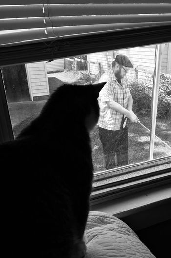 Pets Cat Animal Themes Mammal Domestic Domestic Animals Feline One Animal Animal Domestic Cat Window Indoors  Glass - Material Looking Sitting Looking Through Window