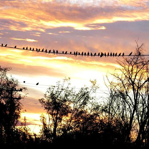 Had a audience this morning while taking sunrise pictures! Natures_lens Earth_in_bloom Eye_for_earth Foto_fanatics_nature Nature_hippys Nature_brilliance Insta_gram_shooters Great_captures_nature Everything_animals Feather_perfection Nature_hippys Princely_shotz Amateurs_shot Opt2travel Foto_catchers Stalking_nature