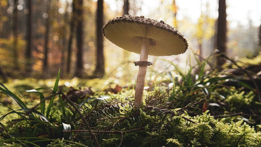 Mushroom. Light