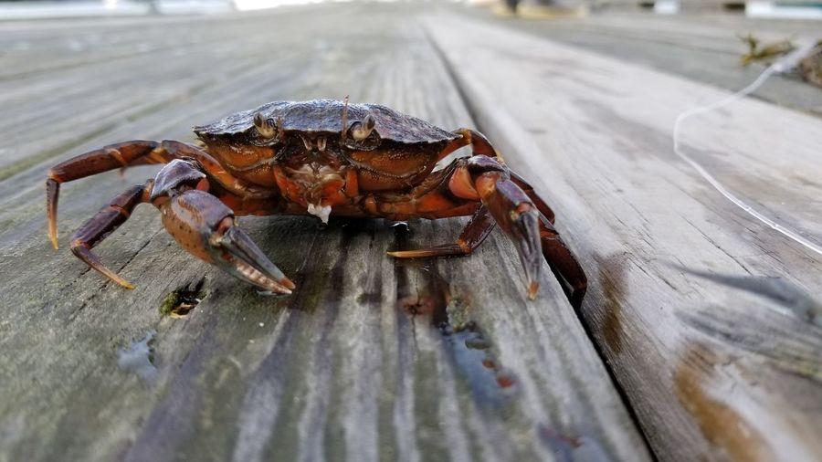 Crab Animal Themes Close-up