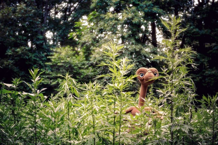E.T. E.T. Extraterrestrial  Alien Plant Tree Growth Nature Green Color No People Representation Lush Foliage Creativity Outdoors Day