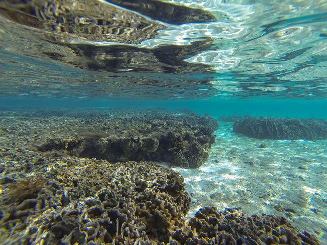 Tumon Bay, Guam Underwater UnderSea Sea Life Coral Nature Beauty In Nature