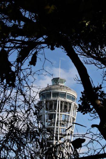 Japan Enoshima Kanagawa Shonan Tower Tree
