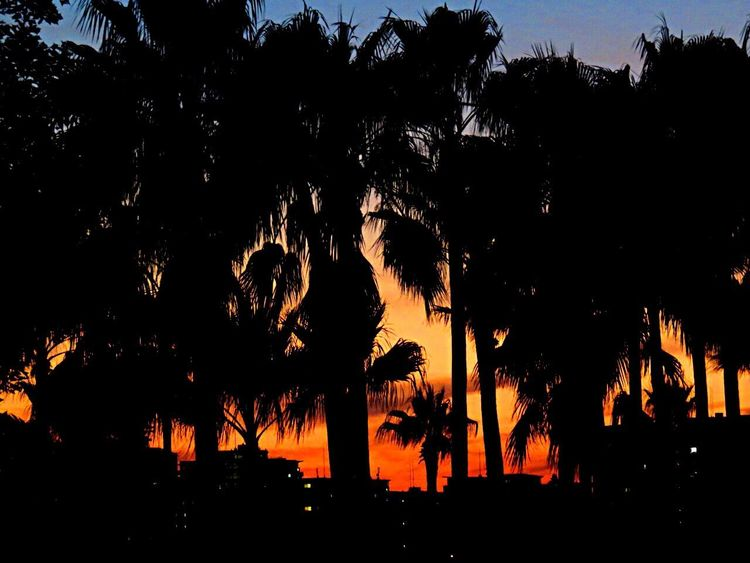 Sunset Sunset_collection Sunset Silhouettes Sunsetlover Palm Trees Trees Town Beautiful Beautiful Sunset Beautifulsky