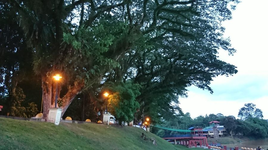 Sky Trees Tree