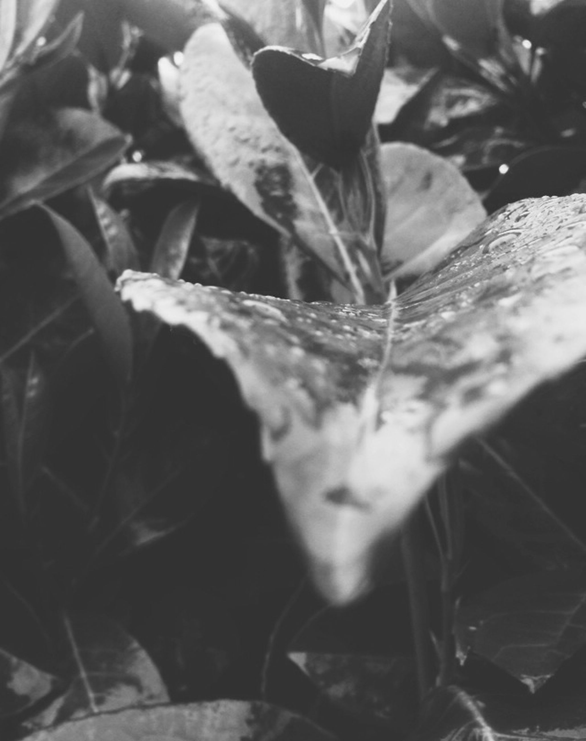close-up, leaf, growth, plant, fragility, freshness, selective focus, nature, beauty in nature, focus on foreground, flower, petal, no people, drop, water, day, botany, wet, stem, outdoors