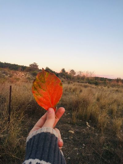 Cropped hand of person holding leaf on field against clear sky during sunset