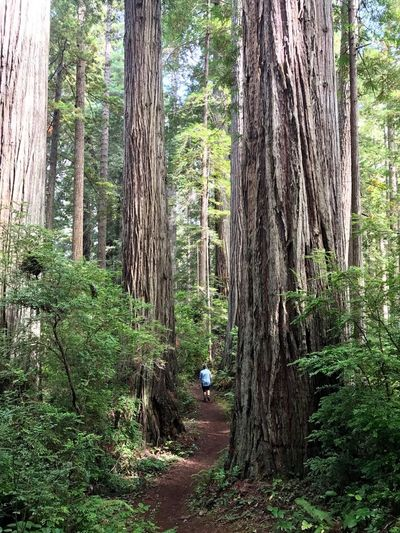 Tree Forest Tree Trunk Nature One Person Outdoor Pursuit Adventure Day Outdoors Full Length People Growth Beauty In Nature Adults Only Domestic Animals One Man Only Animal Themes Adult Mammal Redwoods Redwood Trees Redwood Forest Redwood RedwoodRegionalPark California The Week On EyeEm