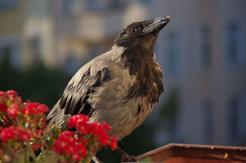Close-up of bird perching on vase
