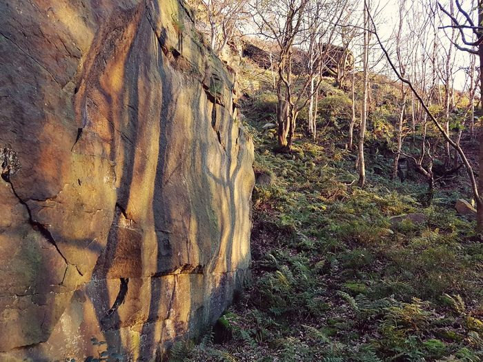 Outdoors Day No People Nature Grass Sky Hell Hole Rocks Light And Shadow Leaf Growth Sunset Landscape Scenics Forest Tranquil Scene Nature Tree Rocks Quarry Heptonstall Hell Hole Rock Formation Textures And Surfaces Travel Destinations Textured