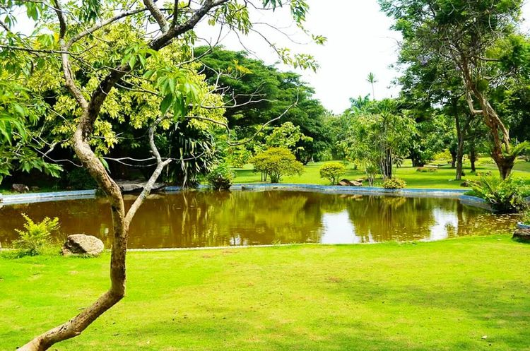 Landscape Great Atmosphere Green Nature Clean And Green Nature Photography Trees
