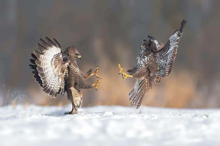 Flock of birds flying over snow
