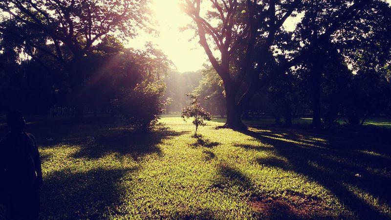 Morning Light Sun Nature Beautiful Nature