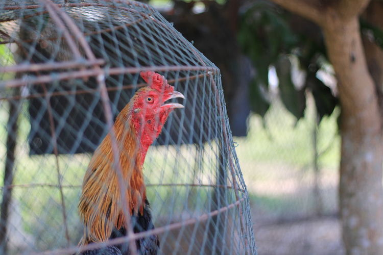 View of a bird in cage