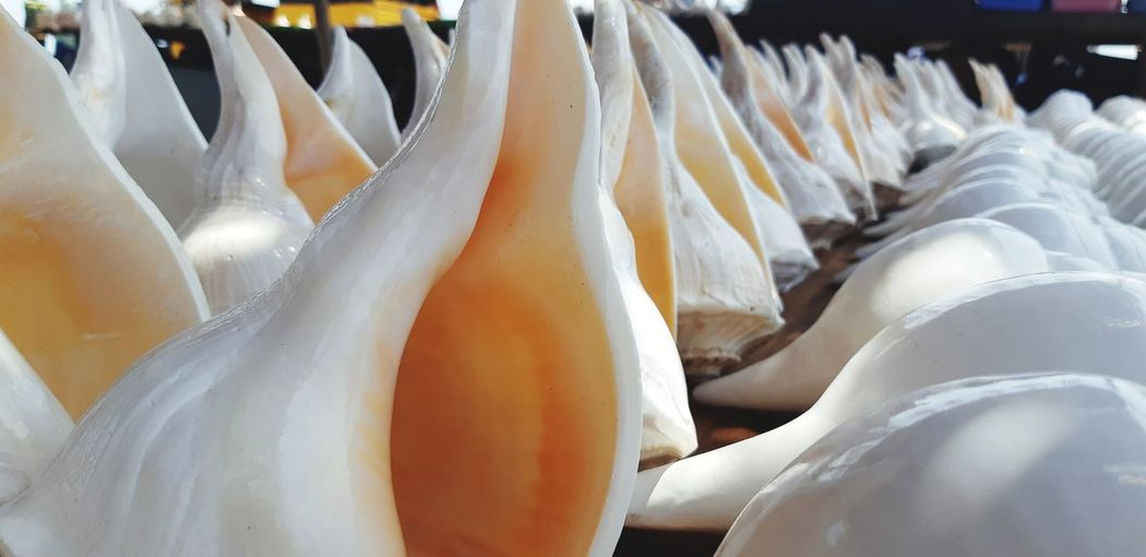 Panoramic view of conch shells