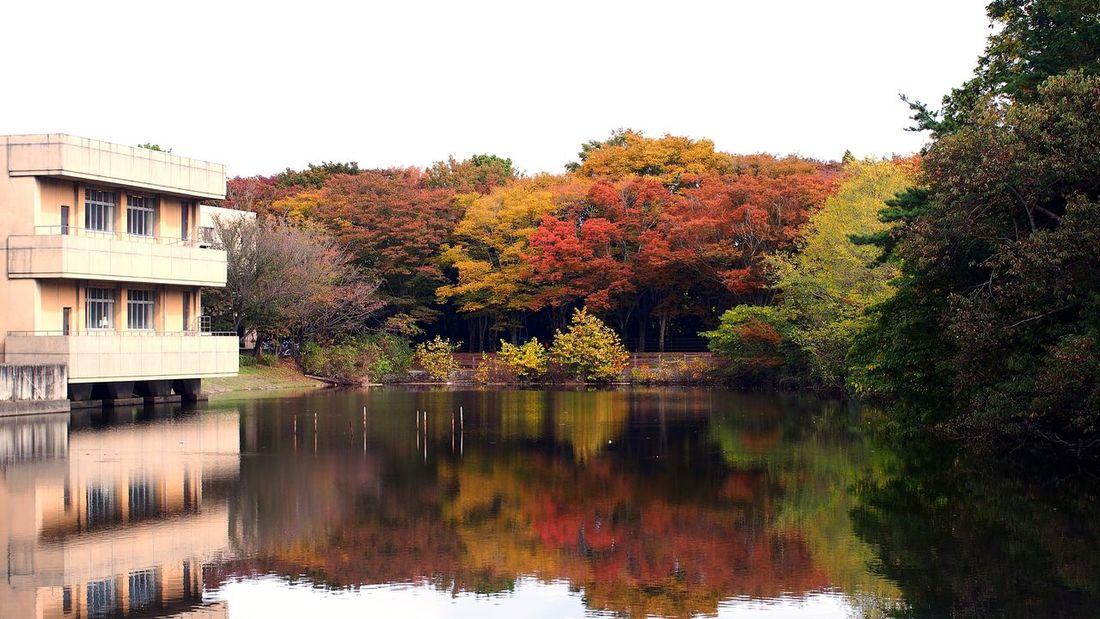 学内で紅葉狩り Reflection Autumn Colors Autumn Leaves CanonFD  #oldlens
