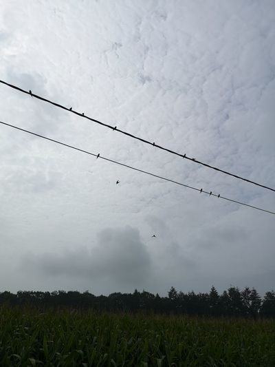 Low angle view of birds on field against sky