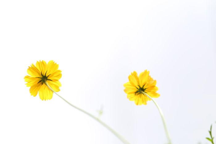 Flower Yellow Fragility Freshness Uncultivated Beauty In Nature Blossom Close-up EyeEm Best Shots EyeEm Best Shots - Nature EyeEm Nature Lover The Purist (no Edit, No Filter) EyeEmNewHere EyeEm Gallery EyeEmBestPics EyeEm 3XSPUnity
