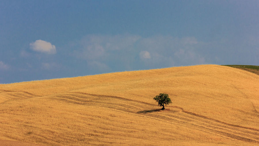 Landscape Land