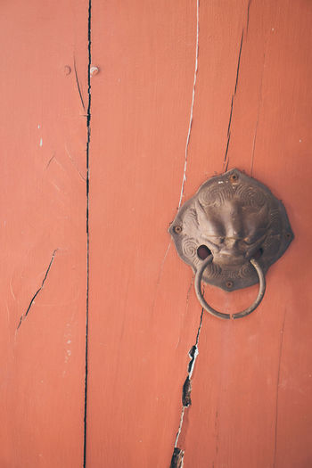 Close-up of a horse on wall