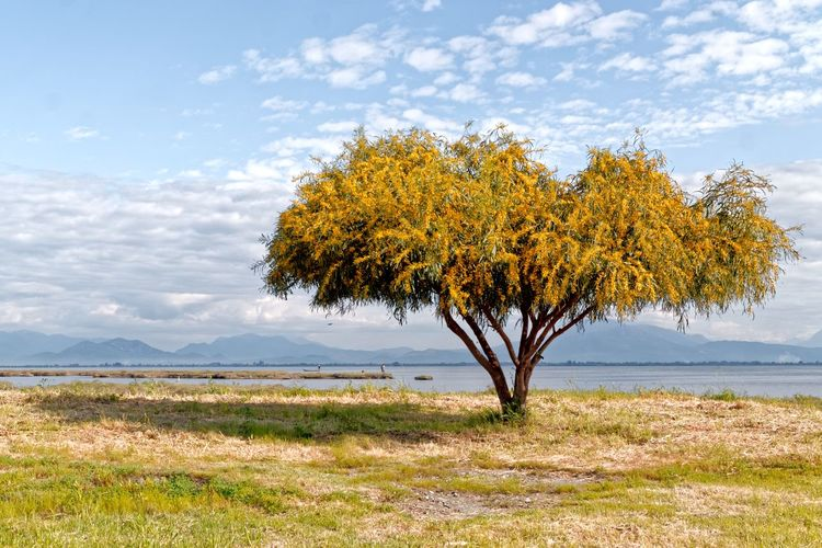 View of tree in field