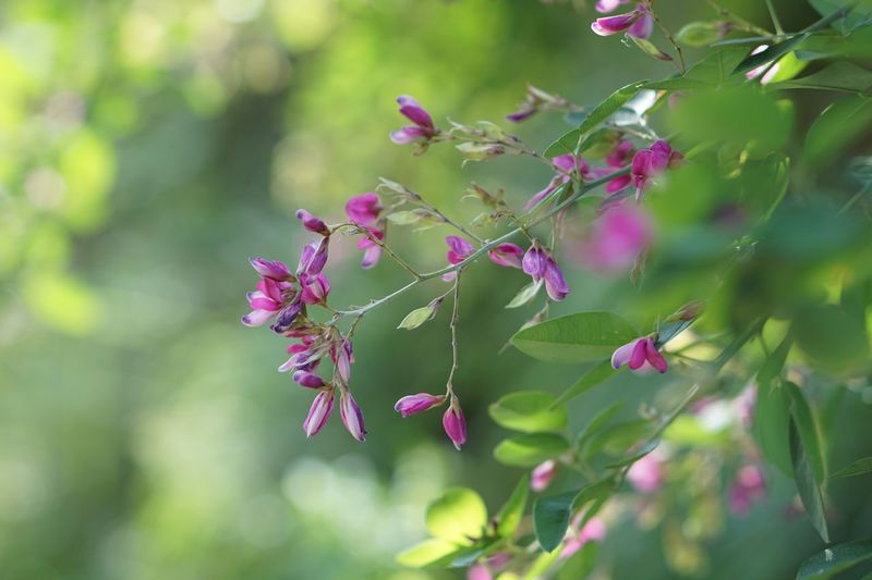 Flower Fragility Nature Pink Color Plant EyeEm Nature Lover Autumn Outdoors Eye4photography  Flower Collection