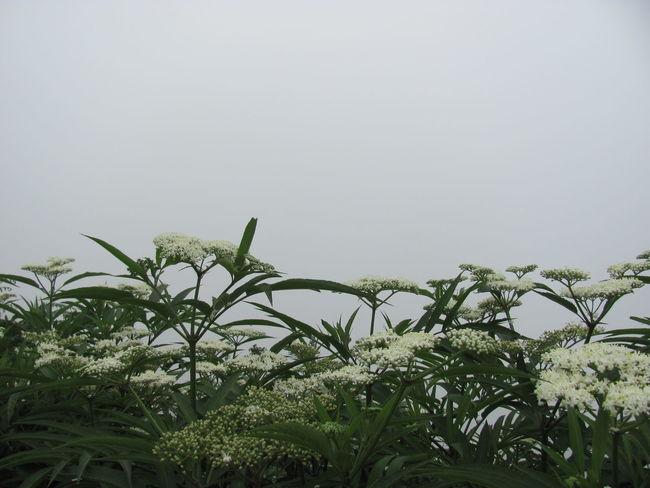 Nature Photography Iran Fog Plants Traveling Travel Photography Village ایران ایرانگردی روستا طبیعت طبیعت ایران گیاهان مه مه_آلود