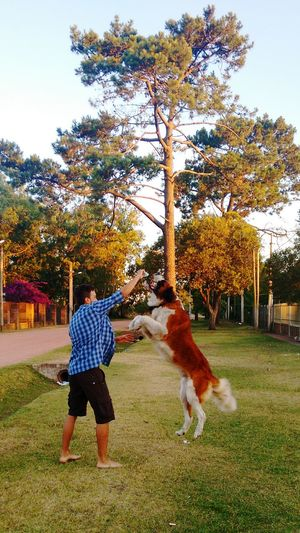 Animal Themes One Animal Pets Domestic Animals Tree Dog Full Length Mammal Togetherness Vertical Childhood Outdoors Nature No People Day Sky