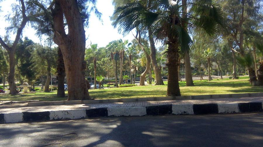 قصر المنتزه اسكندرية No People Sky