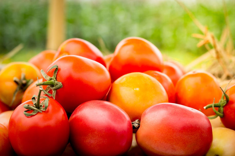 Vegetable Seeds & Plants in thailand Agriculture Background Food Food And Drink Fruit Garden Greenhouse Harvest Healthy Eating Red Ripe Tomato Vegetable Vitamin Yellow