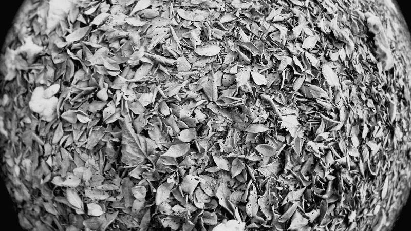 Leaves Backgrounds Textured  Nature Motog4 Blackandwhite Cordoba-argentina Black Color Light And Shadow Córdoba Argentina