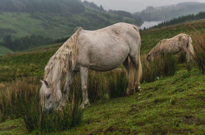 Breccon Wales