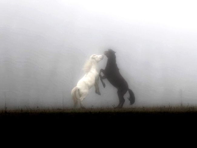 Animal Themes Pets Outdoors Nature Horse Life Landscape #Nature #photography Beauty In Nature Fog Foggy Mist No People Lifestyles Horse Horse Photography