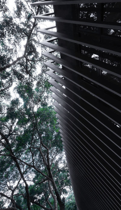 Minimalist Architecture Tree Growth Low Angle View No People Nature Backgrounds Day Outdoors Sky Nature Sony Ilce 5000
