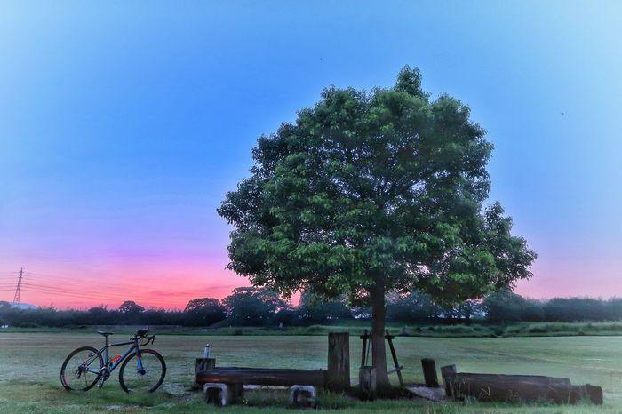 サイクリング 自転車 ロードバイク 木陰 月 日の出 日の出前 朝日 朝 朝焼け グラデーション EyeEm Daily EyeEm Nature Lover Gradation EyeEm EyeEm Daily Nature Cycling Bicycle Sky Moon Crecentmoon Galaxy Star - Space Tree Nature