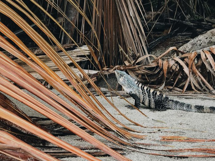 My personal favorite Animal National Park Wildlife Iguana Beach Pattern No People Full Frame Backgrounds Close-up Day Outdoors Wood - Material