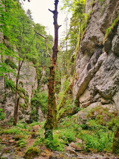 Wonderful place on the mountains Tree Green Color Nature Outdoors Growth No People Day Sunlight Beauty In Nature Forest Grass Rocks Heights Dried Tree On The Path EyeEm Nature Lover Mountain Green Color EyeEm Best Shots - Nature Seven Stairs Canyon Romania Lost In The Landscape EyeEmNewHere