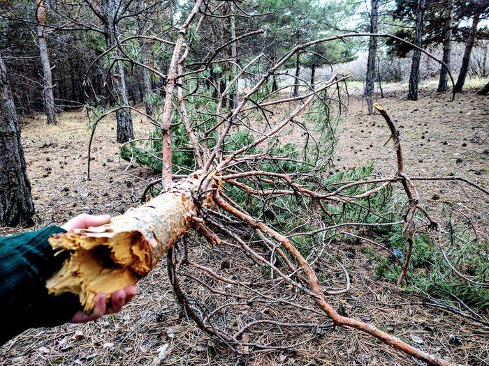 Followme Outdoors Branch Nature Day Tree Forest Twillight Dusk Armenia Sevan, Armenia Lake Sevan