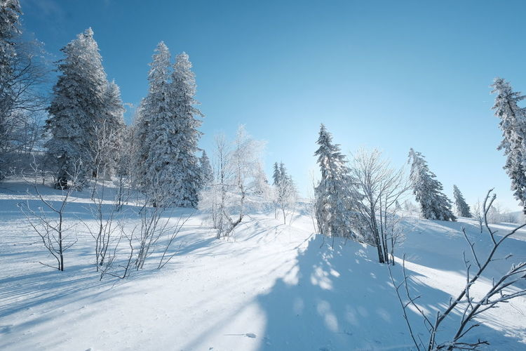 snow is beautiful Snow Cold Temperature Tree Winter Forest Nature Pinaceae Scenics Tranquil Scene Beauty In Nature Frozen Landscaped Sky Rural Scene White Color Landscape Snowing