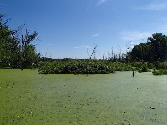 Marais à l'Île St-Bernard Marsh Plant Sky Tree Nature Green Color Water Growth Cloud - Sky Scenics - Nature Outdoors